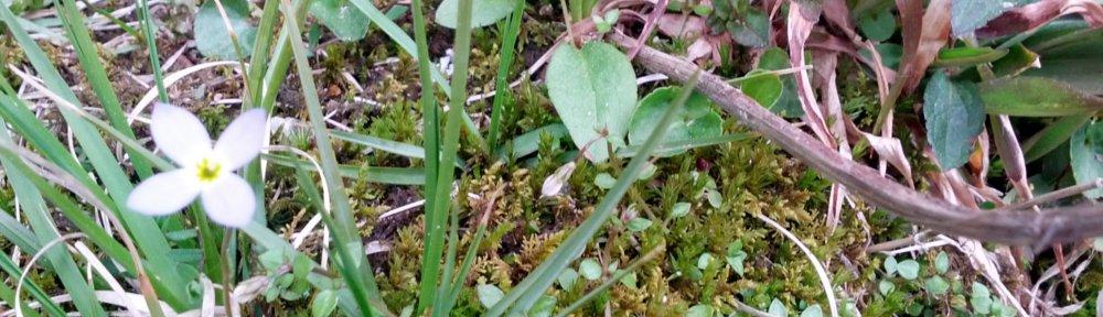 header_forestfloorcloseupflower