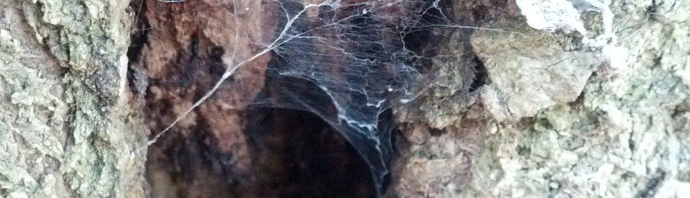 header_spiderhomeintree