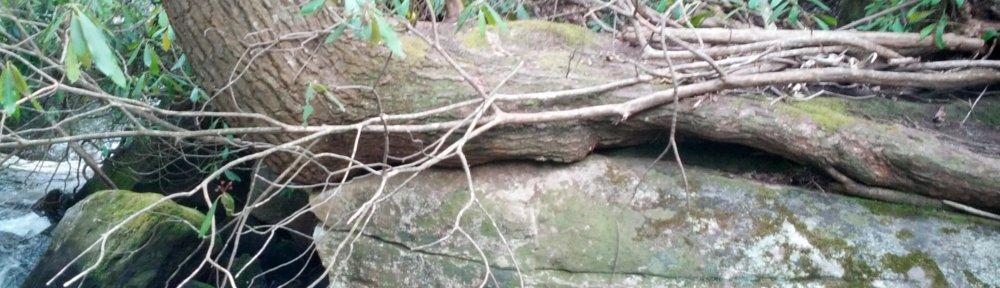 header_treeonrock