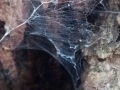 header_spiderhomeintree
