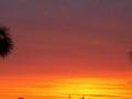 header_sunsetpalms
