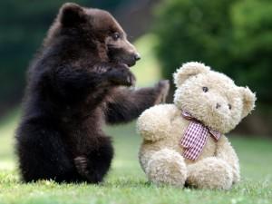 bear-cub-playing-with-teddy-bear-big