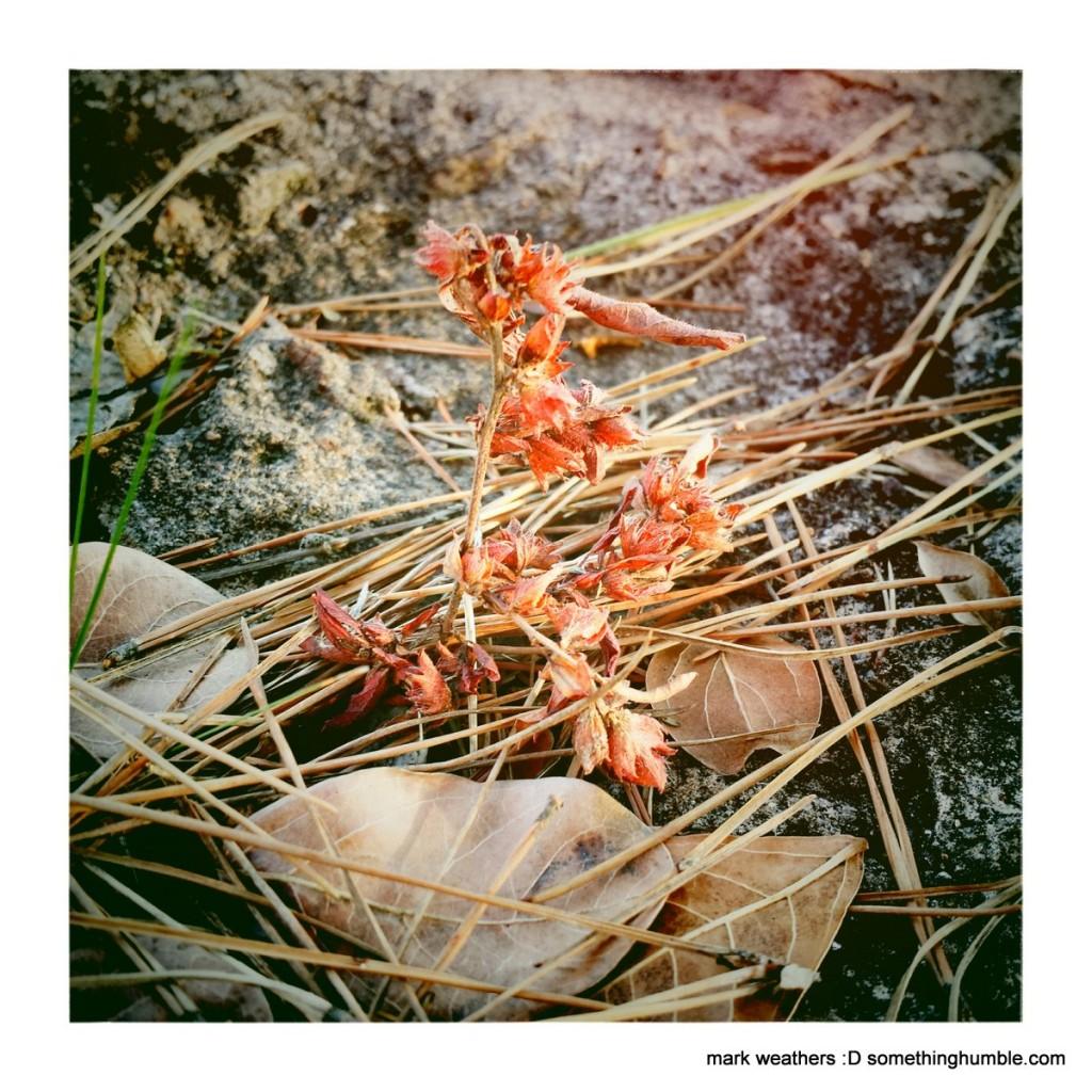 ArlingSandy2_MarkWeathers_2014-11-28_IMG_0063
