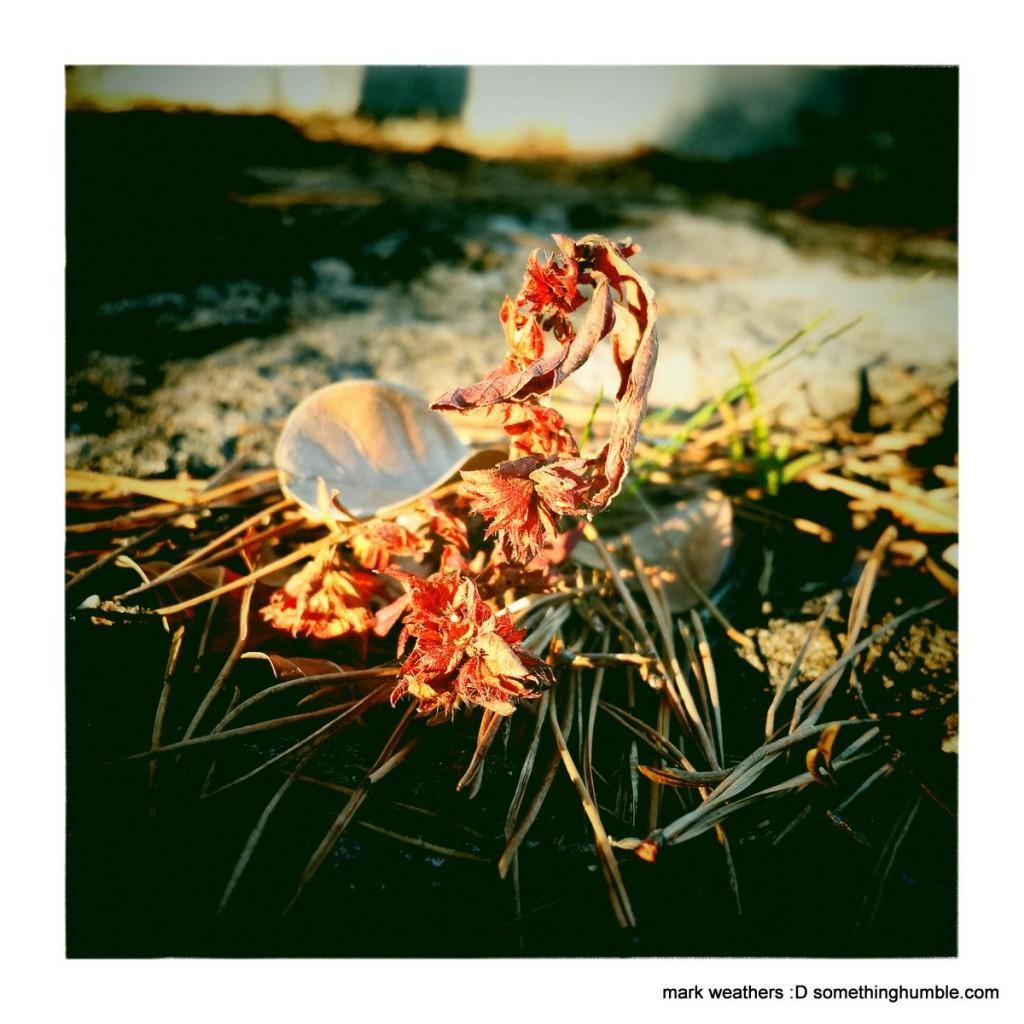 ArlingSandy2_MarkWeathers_2014-12-04_IMG_0001
