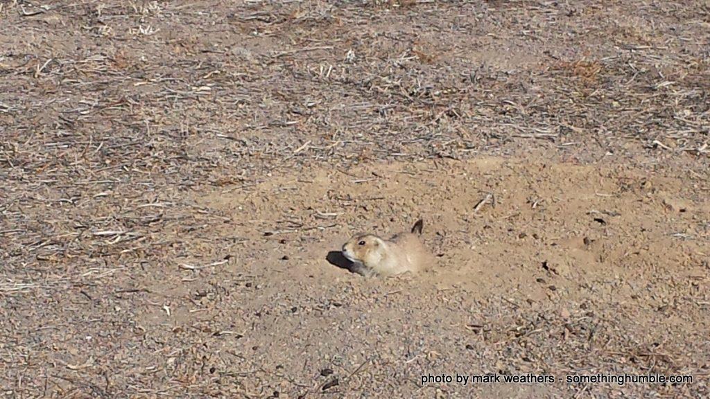 Prairie dog hole'd up